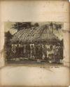 Natives, Tongatapu