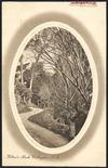 Postcard. Wilton's Bush, Wellington, N.Z. New Zealand post card (carte postale). F.T. series no. 101. Printed in Saxony. [ca 1910]