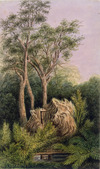 Gold, Charles Emilius 1809-1871 :[Ruined raupo whare by a stream in New Zealand bush, Wellington region, between 1848 and 1860]
