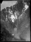 Man standing by Ellis & Burnand's railcar at Ongarue