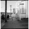 Horse hitched to pole on corner of Boston Terrace and Aro Street, and, tree planting on a steep hill overlooking Wainuiomata