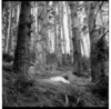 A baby lying on a shawl in a patch of sunlight filtering through a stand of pine trees