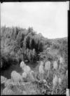 Okupata River, Kawhia