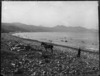 Beach scene with horse and boy, Waipiro Bay, East Coast, Gisborne region
