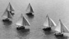 X-Class yachts during the Sanders Cup on Wellington Harbour