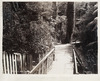 Native forest remnant, Botanic Garden, Wellington - Photograph taken by Conolly