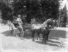 Pair in a horse drawn buggy