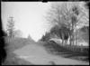 Whitmore Street, Kihikihi, looking south, circa 1912