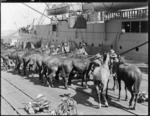 Horses being readied for departure by ship during World War One