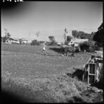 View of a Chinese market garden during World War II