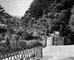 Botanical Gardens, Kelburn, Wellington