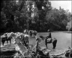 Packhorses, Patarau River, Taitapu