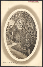 Postcard. Wilton's Bush, Wellington, N.Z. New Zealand post card (carte postale). F.T. series no. 101. Printed in Saxony. [ca 1910]