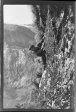 Edgar Williams climbing a steep rock face, [Mount Elliot?], Fiordland National Park, Southland Region
