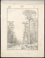 Swainson, William, 1789-1855 :Road thro' the Birch Forest, Upper Hutt (in Oct 1847. 28 Oct '47 / W Swainson, 1848.