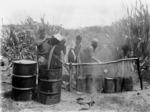 Men boiling down blackfish blubber, Tokerau Beach
