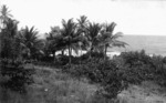 Plants on Banaba Island, Kiribati
