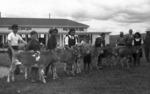Tikitiki Calf Club day ca 1948