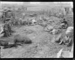 Horses killed in a German bombing raid