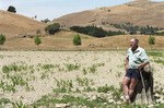 Wairarapa farmer Bruce McKenzie standing in a parched paddock