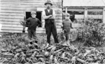 Man, two boys, and a pile of crayfish, at the back of Harry Daniel's fish shop, Manaia
