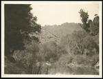 View of Mokau River