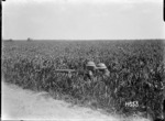 A machine gun in a field of growing corn during World War I, Colincamps