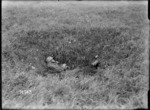 A dead German soldier in a shell hole on the Western Front, World War I