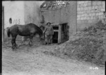 New Zealand artillery soldier watering his horse, France