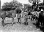 A World War I veterinarian treating a horse's teeth, Louvencourt, France