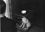 Caged dog, Auckland 1969.tif
