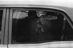 little horse in car window. 1974.tif
