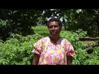 Les feuilles de piment - Les feuilles comestibles du Pacifique