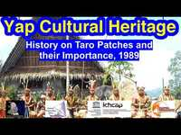History on Taro Patches and their Importance, Yap, 1989