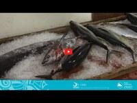 COASTAL FISHERIES TRAINING | 2.2 - Airfreighting chilled fish