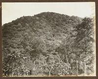 Mount Vaea. From the album: Samoa