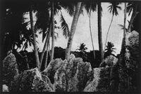 Nauru (carved palm, coastal fringe)