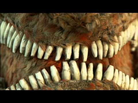 The Feathered Face of War - Tales from Te Papa episode 51
