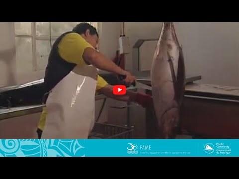 COASTAL FISHERIES TRAINING | 2.3 - Quarter loining of albacore tuna