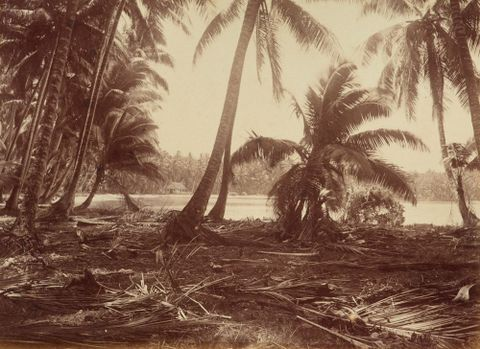Ebon. From the album: Views in the Pacific Islands