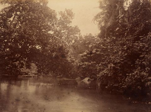 Creek at Ruins Pohnpei. From the album: Views in the Pacific Islands