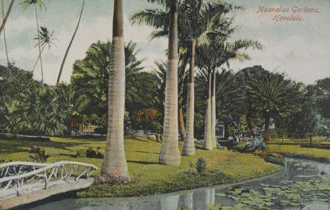 Moanalua Gardens, Honolulu (from Albert Ellis Ocean Island Photograph Album)
