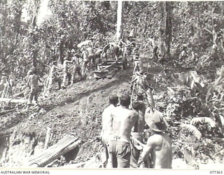 BOUGAINVILLE ISLAND. 1944-12-01. GUNNERS OF NO. 12 BATTERY, 4TH FIELD REGIMENT MANDHANDLING THEIR 25 POUNDER GUNS INTO POSITION ON BENCHES CUT OUT OF THE SIDE OF A HILL ON THE RIGHT BANK OF THE ..