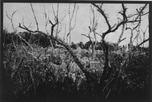Nauru (tree, early mining works)