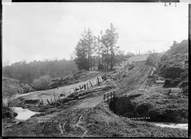 Te Mata Road, near Raglan, 1910 - Photograph taken by Gilmour Brothers