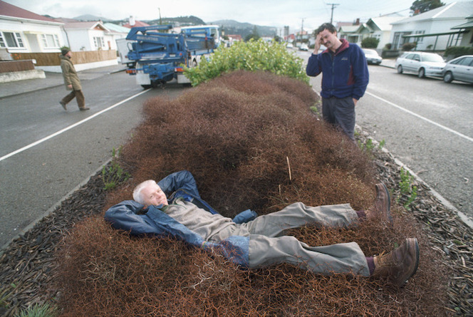 Rare plant totoraro (Muehlenbeckia astonii) growing in a traffic island - Photograph taken by Craig Simcox