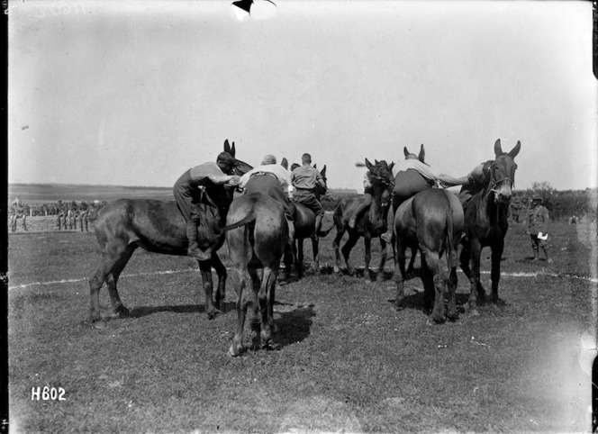 Wrestling on mules, Louvencourt