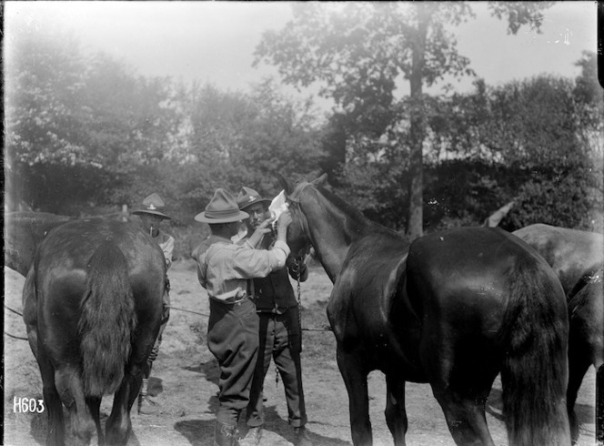 World War I veterinarians bandaging a horse's eye, Louvencourt, France. Royal New Zealand Returned and Services' Association :New Zealand official negatives, World War 1914-1918\. Ref: 1/2-013211-G