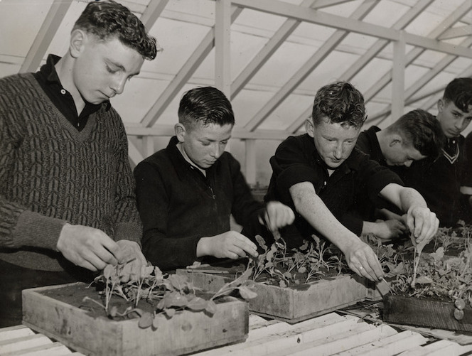 Students from Avondale College, Auckland, planting seedlings during a horticulture class