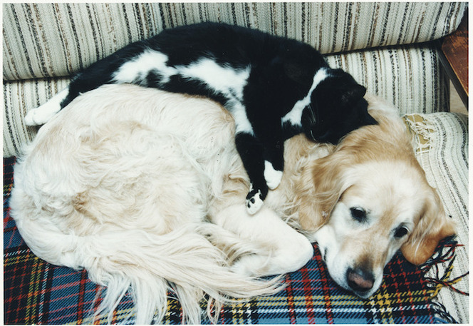 A dog and a cat snuggle up together - Photograph taken by John Nicholson
